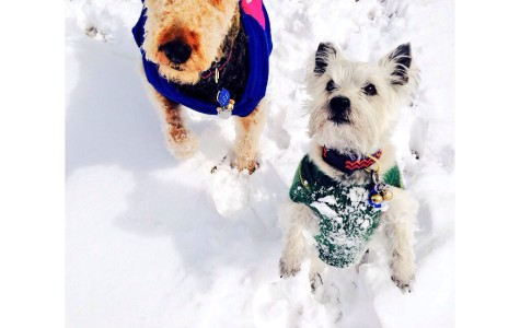 Furry Friends Enjoying the Change in Weather