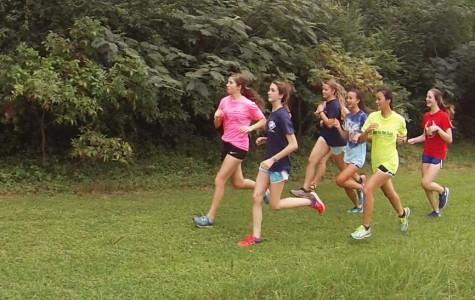 """""""Run Forest, run!"""""""