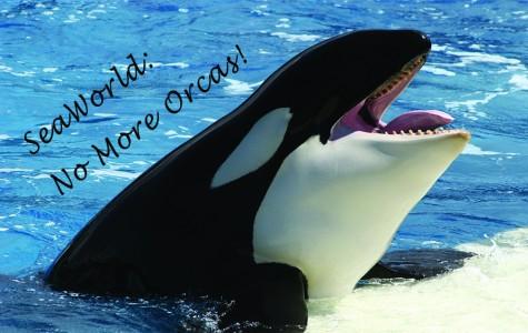 SeaWorld: No More Orcas!