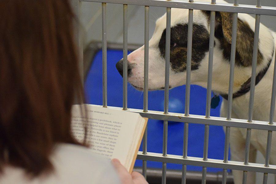D.I. Pet Adoption (Updated)