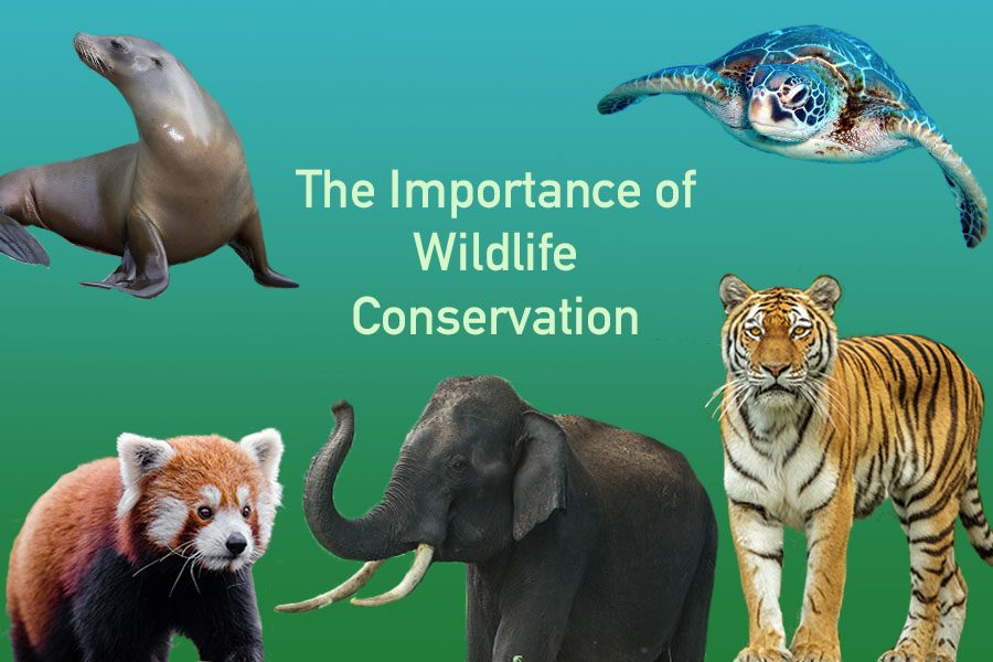 The Conversation About Conservation