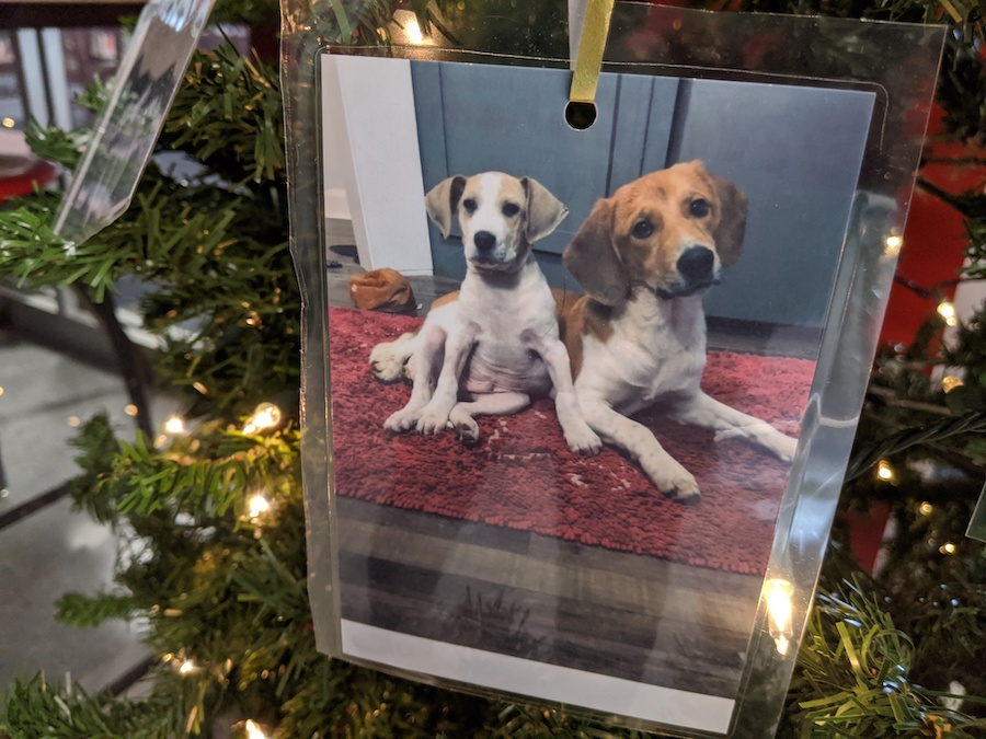Foster Animal Angel Tree