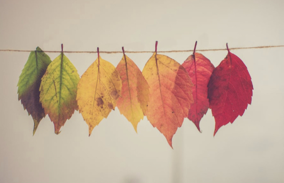 School's Out For….Fall!